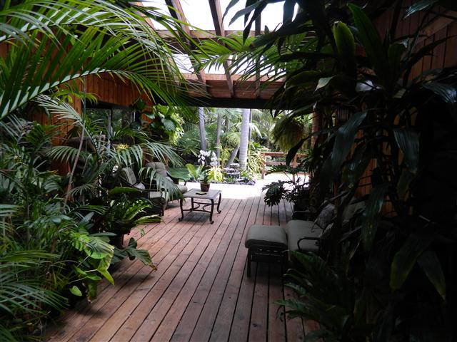Tropical patio with palm trees