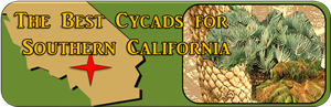 Best Cycad for So Cal banner