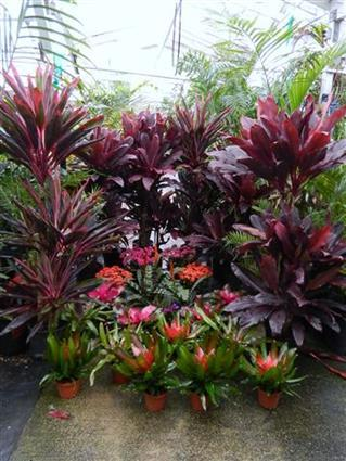 Colorful Tropical Plants at Jungle Music