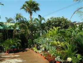 Tropical Plants at Jungle Music