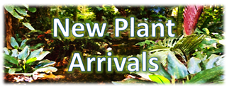 New Plant Arrivals Banner