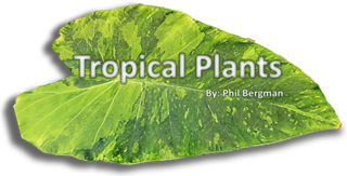Tropical Plant Banner modified