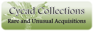 Cycad Collections Banner Edited