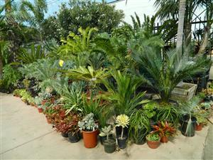 assorted tropical plants