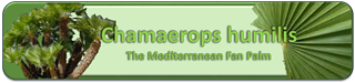 Mediterranean Fan Palm Banner