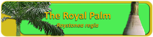 Royal Palm Banner