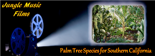 Palms Species for So Cal Slide Show Banner
