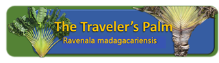 Ravanala banner the Traveler Palm