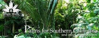 Banner Palms for Southern California