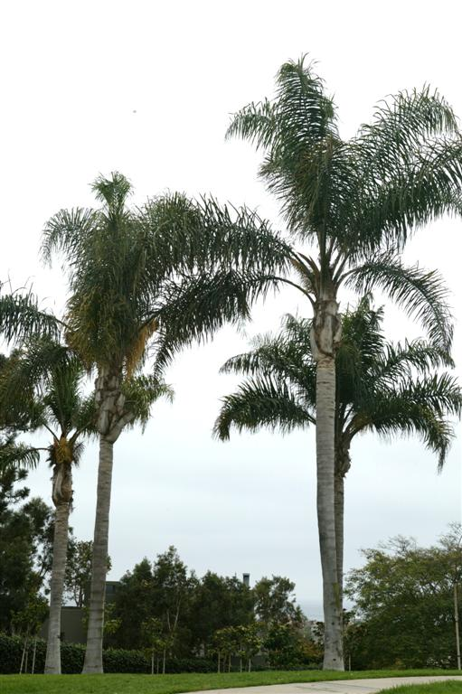 Queen Palms park