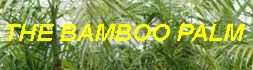 Bamboo_Palm_Banner