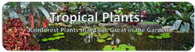 Tropical Plant banner